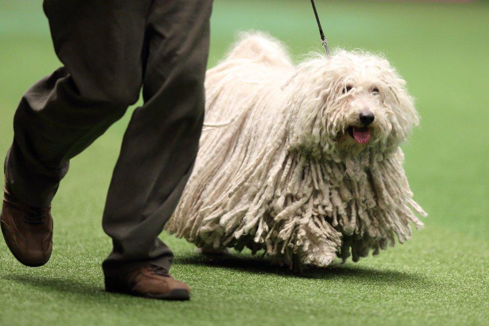 Hungary Dog Show